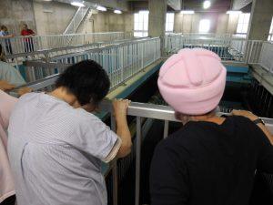 浄水場 (2)